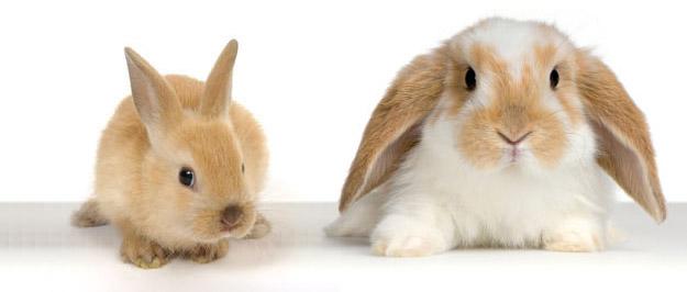 -Animali-in-vendita-questa-settimana