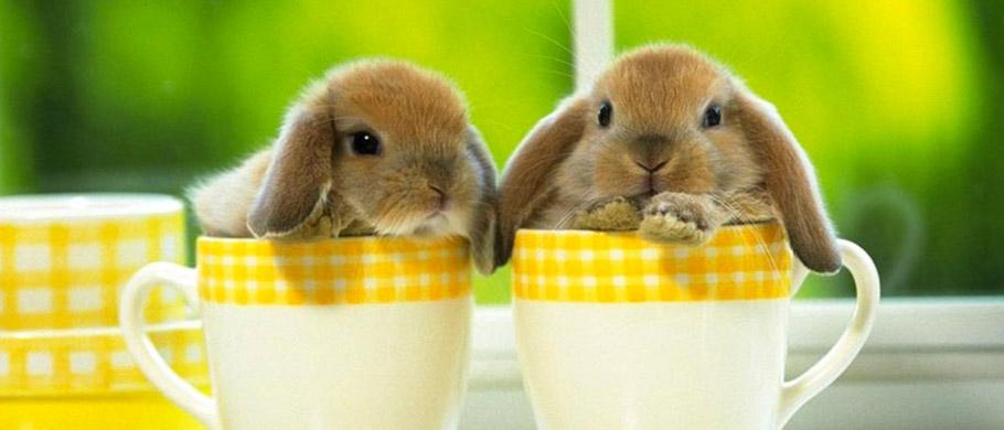 HP---coniglietti-1