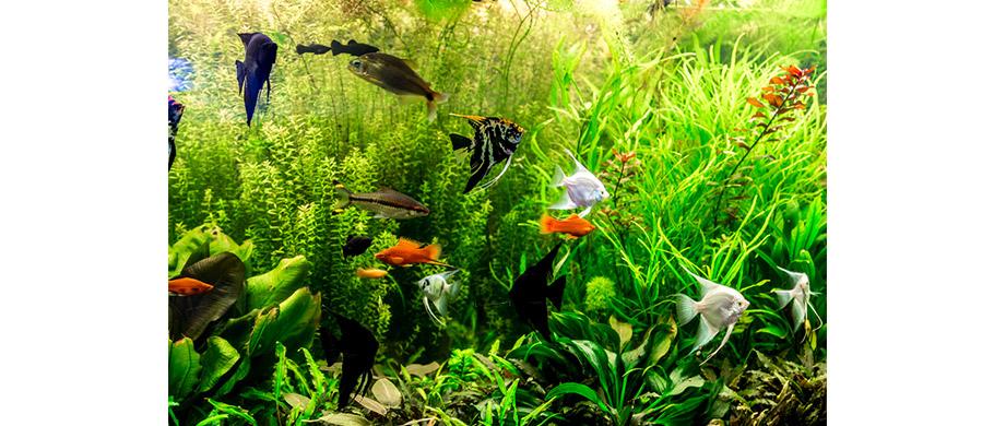 HP---pesci-tropicali-1