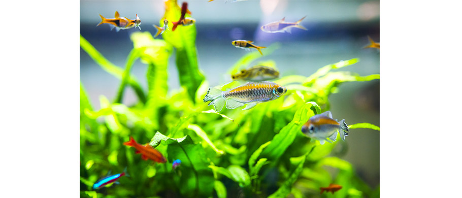 HP---pesci-tropicali-2
